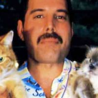 Freddie Mercury and His Love for the Cats He Treated Like Children
