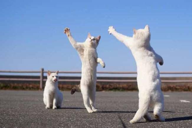 dancing-8