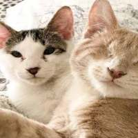 Couple Save Blind Kitten Then Return To Shelter For His Brother
