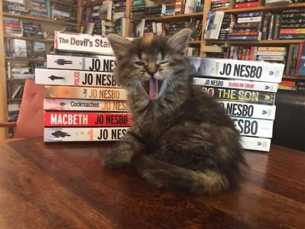 bookstore-8