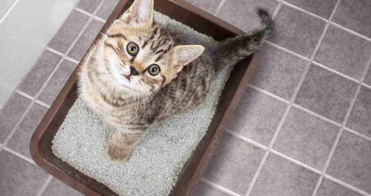 arm and hammer sifting litter box