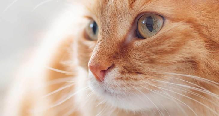 funny orange cat names