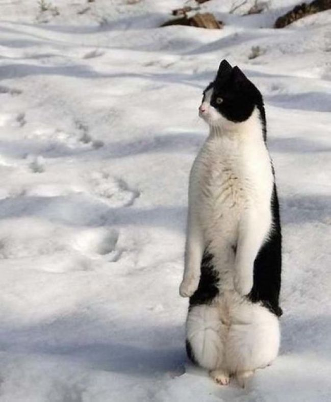 penguin-14