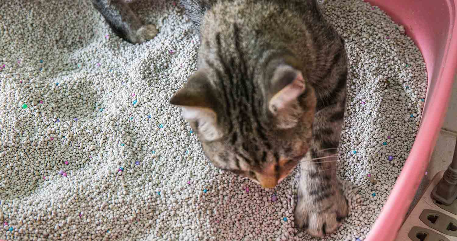 clumping and non clumping litter