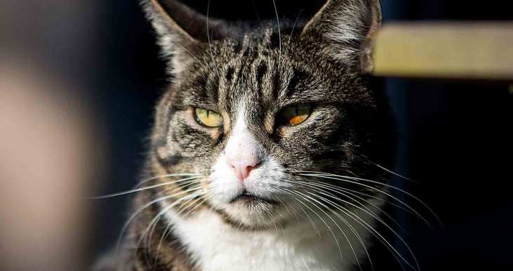 best-cat-food-for-older-cats-with-bad-teeth