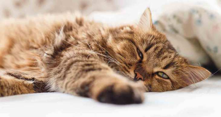 cat-fever-how-to-tell