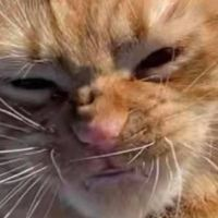 Cat Goes to the Beach for the First Time and His Expressions are Hilarious