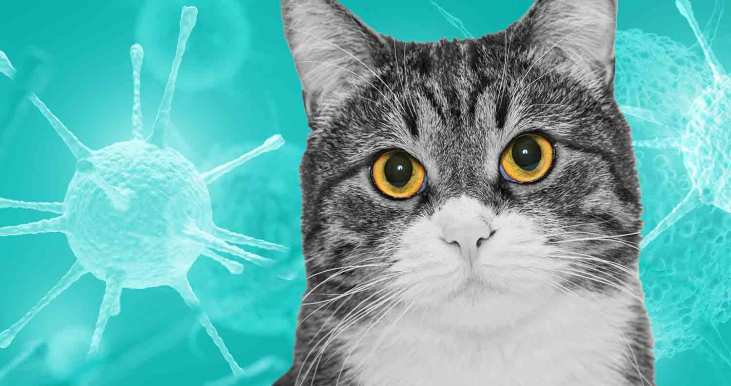 Feline-Immunodeficiency-Virus