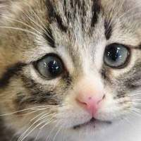 Meet a Kitten with Worried Eyes that Will Melt Your Heart