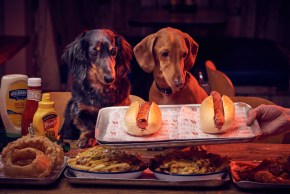 MEATLIQUOR | IN THE DOG HOUSE | THE LITTLEST HOBO | WE LOVE FOOD, IT'S ALL WE EAT
