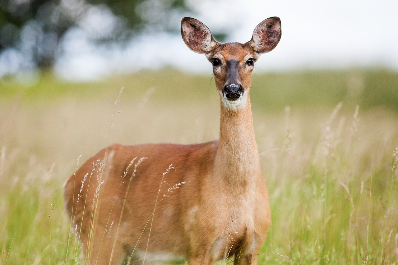 Things to Do in Wales-roe-deer
