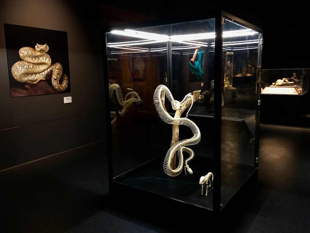 Snakes Exhibition at the National Museum Cardiff - 2