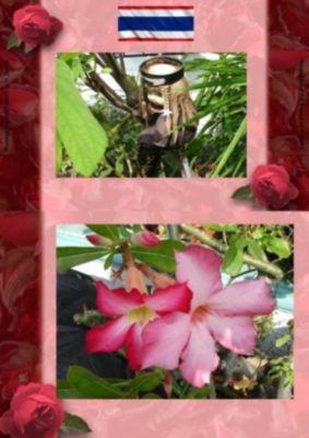 Thai Blumen und Pfanzen Photobuch von Heinz Duthel