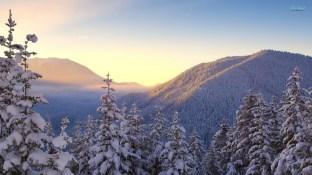 snowy-fir-trees-16450-1920x1080