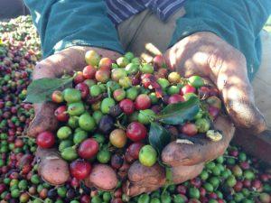 Brasilien ist der größte Kaffeehersteller und Exporteur der Welt.
