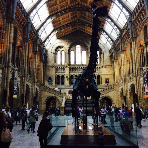 Die Dinosauerierabteilung lohnt den Besuch auf jeden Fall: Sie ist sehr ansprechend und modern gestaltet - für Kinder und auch für Erwachsene.