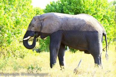 Best of Botswana-3