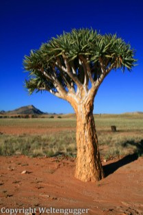 Namibia-074