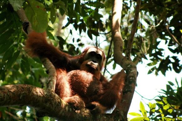 Sumatra (42 von 80)