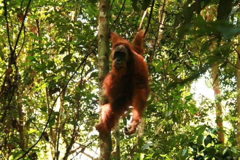 Sumatra (43 von 80)