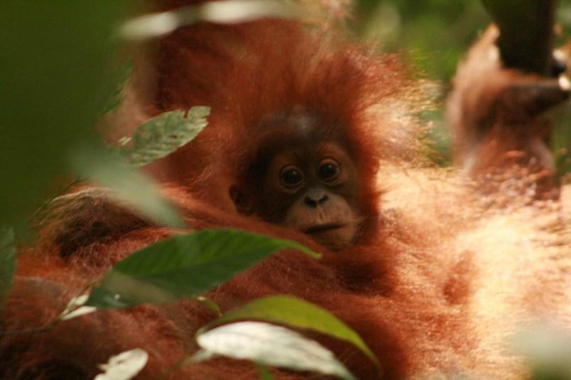 Sumatra (49 von 80)