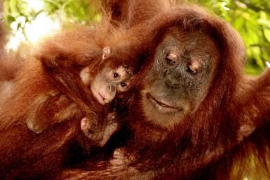 Sumatra (52 von 80)