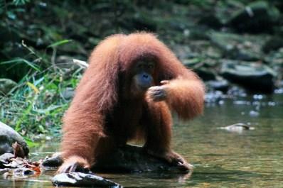 Sumatra (67 von 80)