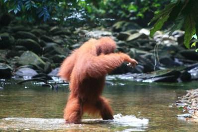 Sumatra (68 von 80)