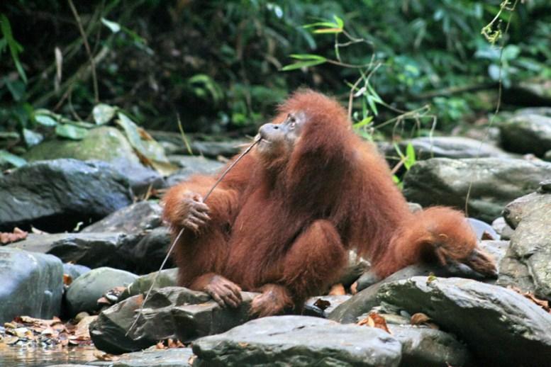 Sumatra (70 von 80)