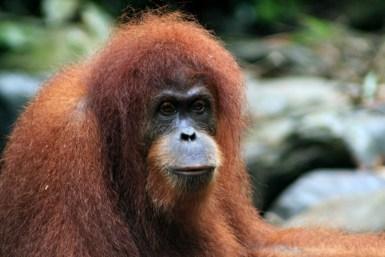 Sumatra (71 von 80)
