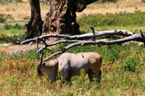 Tansania-54