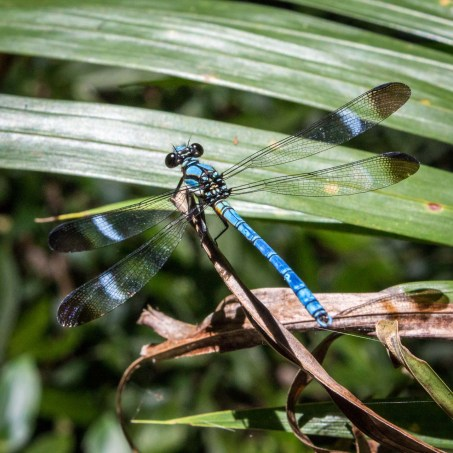 Dragonfly from above