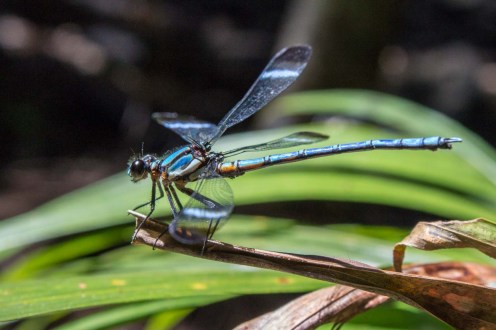 Dragonfly from the side