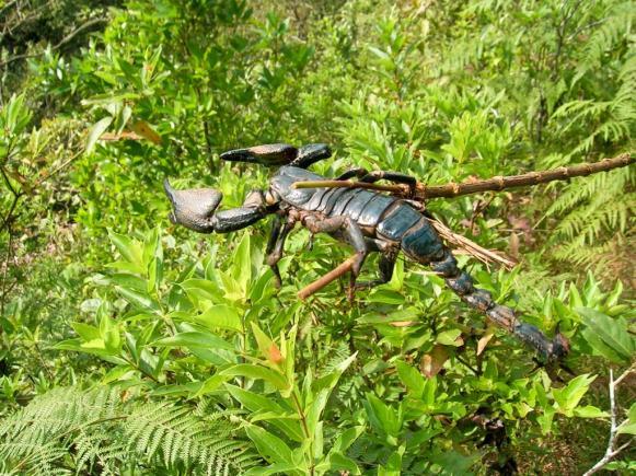 Skorpion auf dem Weg (zum Glück schon tot, oder?)