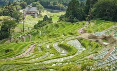 rice terrace Japan