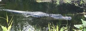 Shark-Valley in Florida