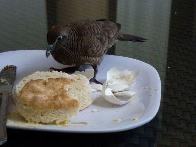 Nicht nur wir freuen uns auf das Frühstück