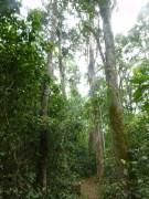 auf den Wanderwegen durch den Wald ist man völlig allein, nur die Tiere beobachten...