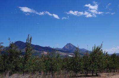 Die R62 führt hinter den Bergen des Tsitsikamma durch das Land. Man fährt dutzende von Kilometern an Apfelplantagen vorbei