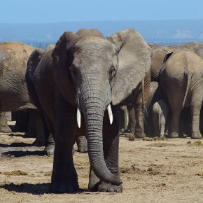 Im Addo Elephant Nationalpark