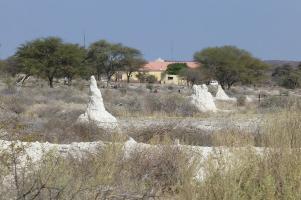 Während bei Outjo die weißen Termitenhügel noch in der Sonne liegen...