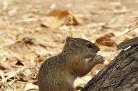 Das kleine Hörnchen freut sich über die Rester vom Frühstück.