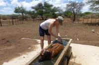Nach getaner Arbeit darf zumindest der Hund erstmal baden.