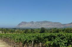 Wein soweit das Auge reicht: Blick von Groot Constantia über die Ostseite der Kaphalbinsel.
