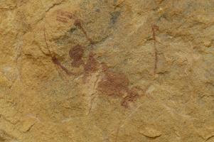 ... wo wir Jahrtausende alte Felszeichnungen entdecken. Hier ist eine Jagdszene dargestellt.
