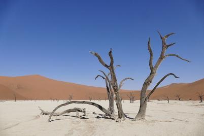 Im Death Valley wächst wirklich nichts (mehr).