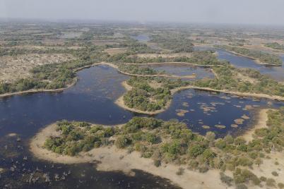 Das Okavango-Delta aus der Luft. Der Fluss versickert später irgendwo in der Steppe.