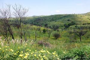 In Namibia herrscht Regenzeit, überall grünt und blüht es.
