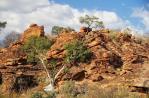 Ideenreichtum der Natur im Mapungubwe Nationalpark.