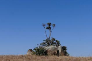 Karge Landschaft im Malolotja-Naturpark...